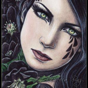 BlackHellebore